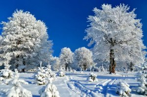 89316__snowy-day_p