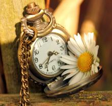 6944749-clock-time-daisy-flower